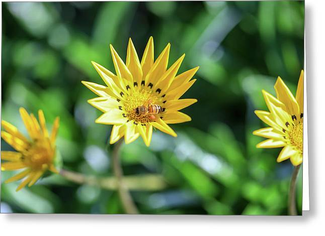 Yellow Flowers And A Bee Greeting Card