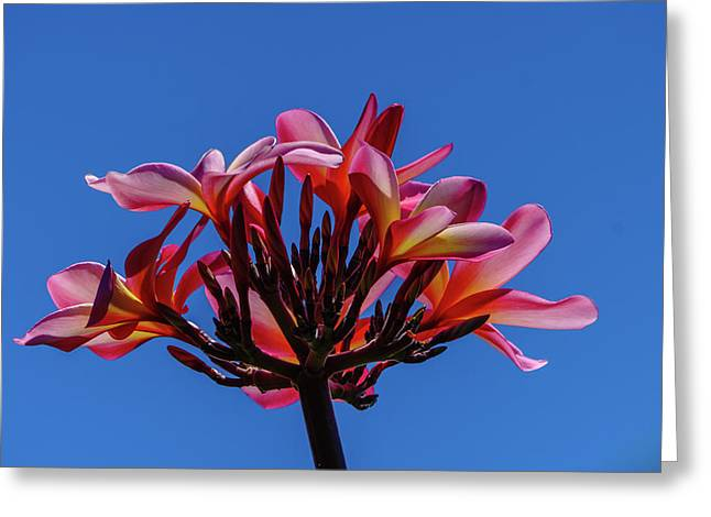 Flowers In Clear Blue Sky Greeting Card