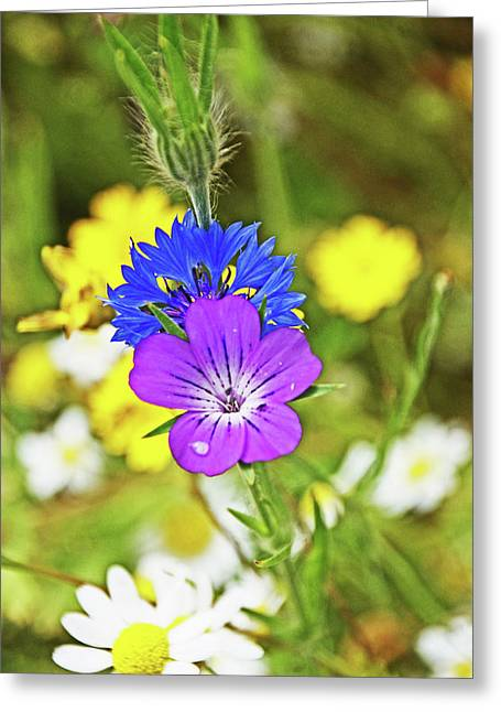 Flowers In The Meadow. Greeting Card