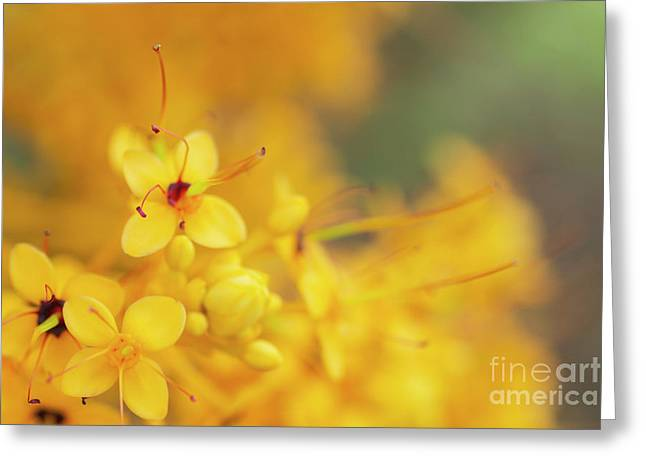 Greeting Card featuring the photograph Flowers Of A Yellow Saraca Tree by Charmian Vistaunet