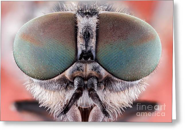 Fly Macro Insect Nature Animal Eye Bug Greeting Card