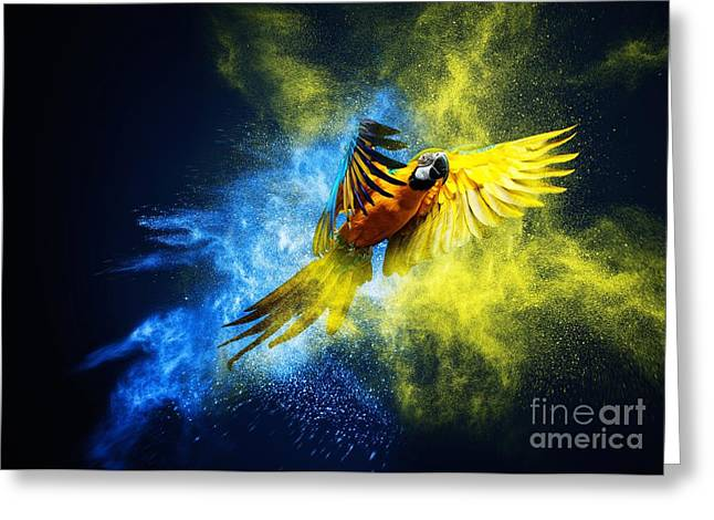 Flying Ara Parrot Over Colourful Powder Greeting Card