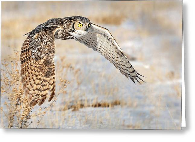 Flying Great Horned Owl Greeting Card