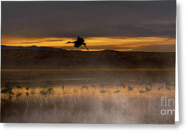 Flying Over Crane Pond Greeting Card