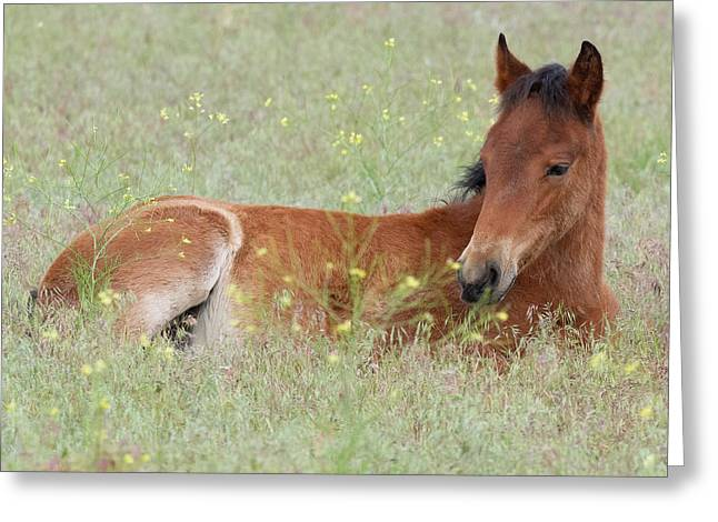 Foal In The Flowers Greeting Card