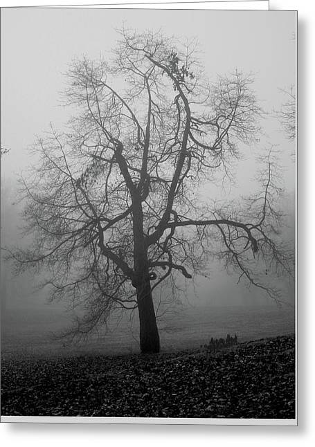 Foggy Tree In Black And White Greeting Card