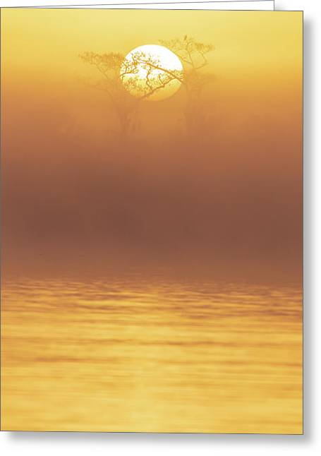 Foggy Wetlands Sunrise Greeting Card