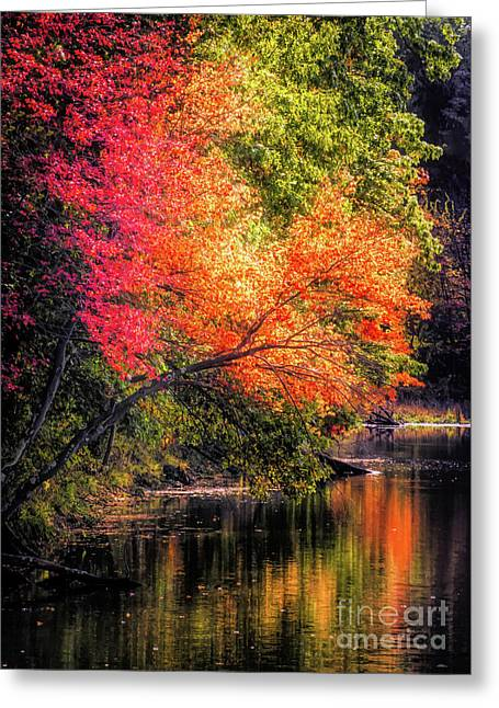 Foliage Over Forge Pond Greeting Card