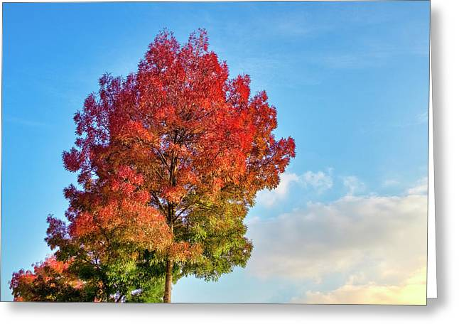Greeting Card featuring the photograph Foliage In Flanders by Fabrizio Troiani