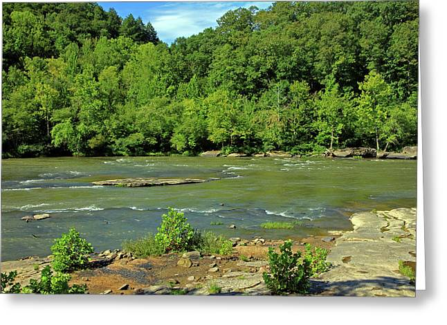 Greeting Card featuring the photograph Forest At Cumberland River by Angela Murdock