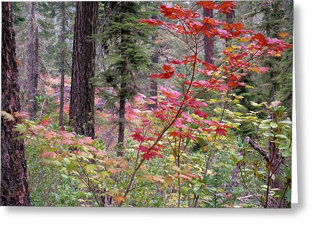 Forest Autumn Greeting Card by Leland D Howard