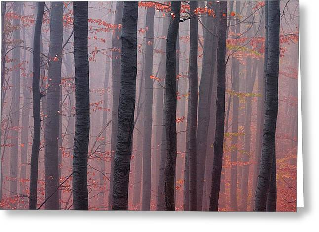 Forest Barcode Greeting Card