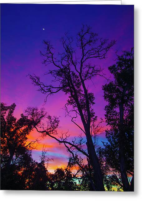 Forest Colors Greeting Card