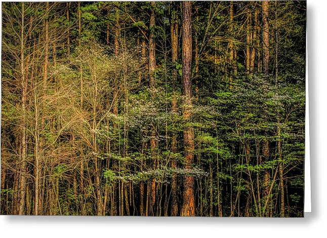 Forest Dogwood Greeting Card