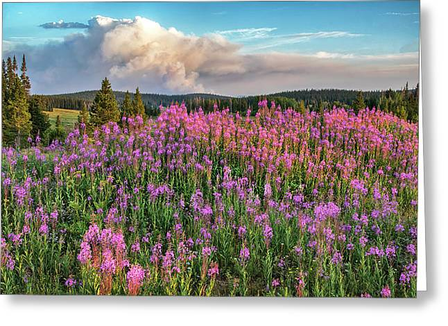 Forest Fire And Blooming Lupine Near Steamboat Springs Colorado Greeting Card
