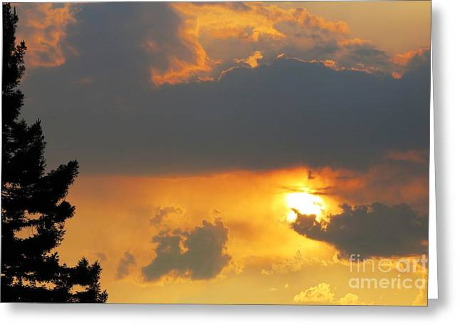 Forest Grove Solar Storm Greeting Card