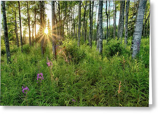 Greeting Card featuring the photograph Forest Growth Alaska by Nathan Bush
