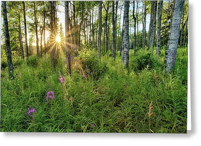 Forest Growth Alaska Greeting Card