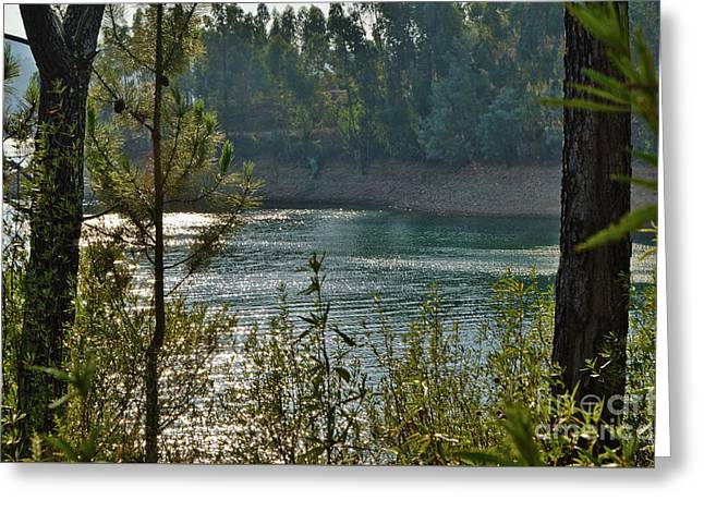 Forest Lake In Amendoa Greeting Card