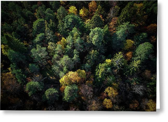 Forest Landscape - Aerial Photography Greeting Card