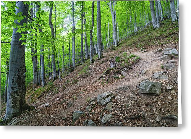 Greeting Card featuring the photograph Forest On Balkan Mountain, Bulgaria by Milan Ljubisavljevic