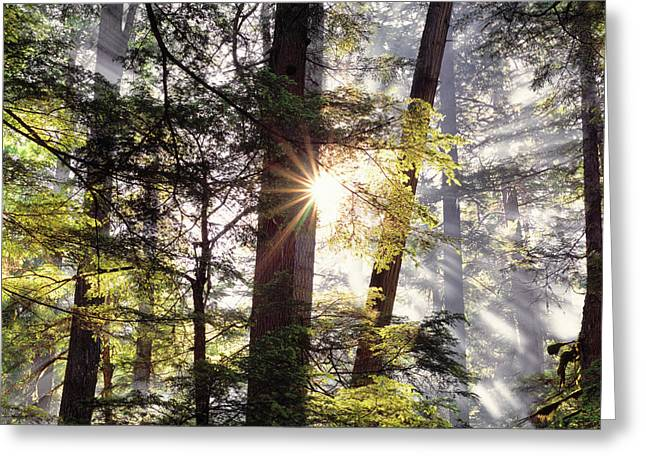 Forest Sunrise Greeting Card by Leland D Howard