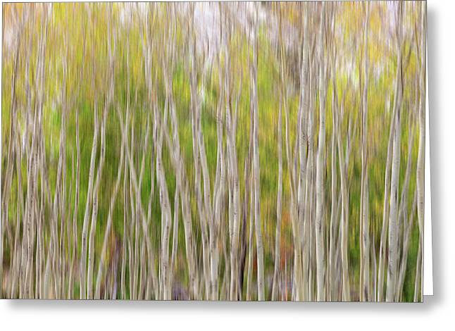 Greeting Card featuring the photograph Forest Twist And Turns In Motion by James BO Insogna