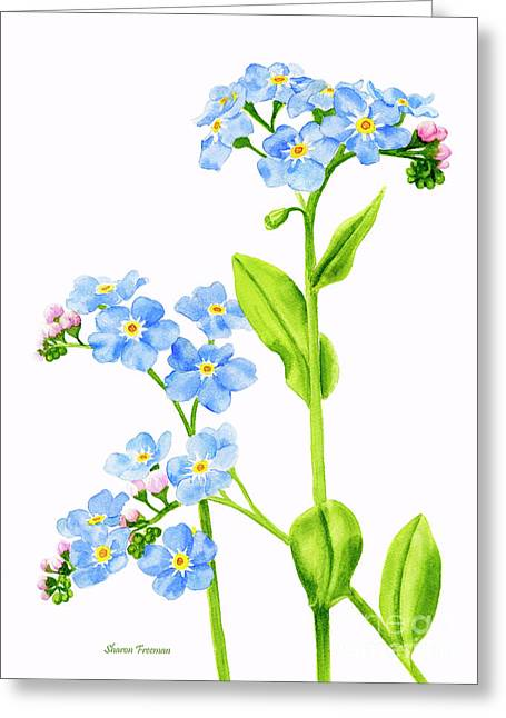 Forget-me-nots On White Greeting Card
