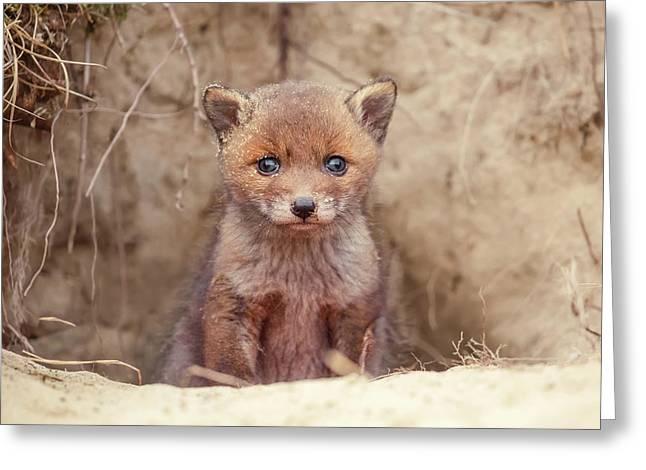 Fox Kit Series - Newborn Fox Baby Greeting Card