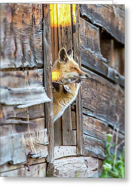 Fox Test  Greeting Card