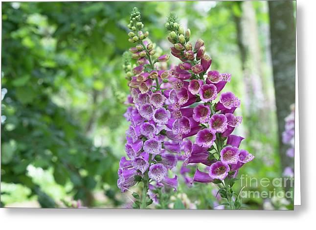 Foxglove Purple Carousel  Greeting Card