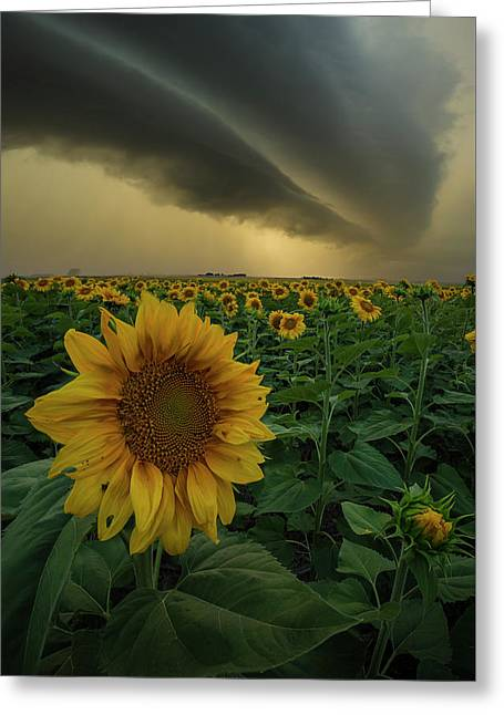 Greeting Card featuring the photograph Frailty  by Aaron J Groen