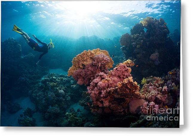 Free Diver Exploring Vivid Coral Reef Greeting Card