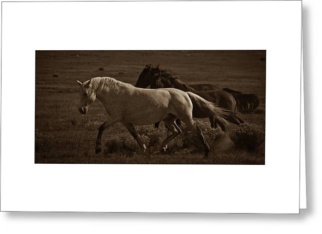 Greeting Card featuring the photograph Freedom II by Catherine Sobredo