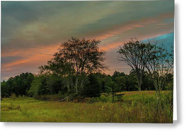 Greeting Card featuring the photograph Pine Lands In Friendship Sunrise by Louis Dallara