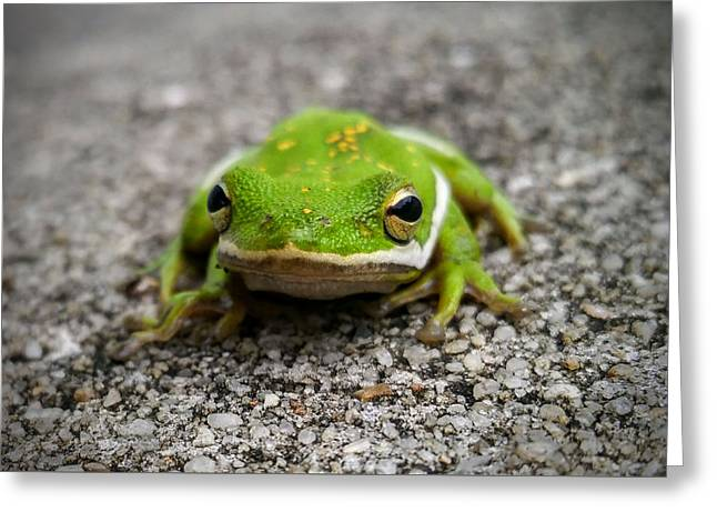 Greeting Card featuring the photograph Frogger by Vincent Autenrieb