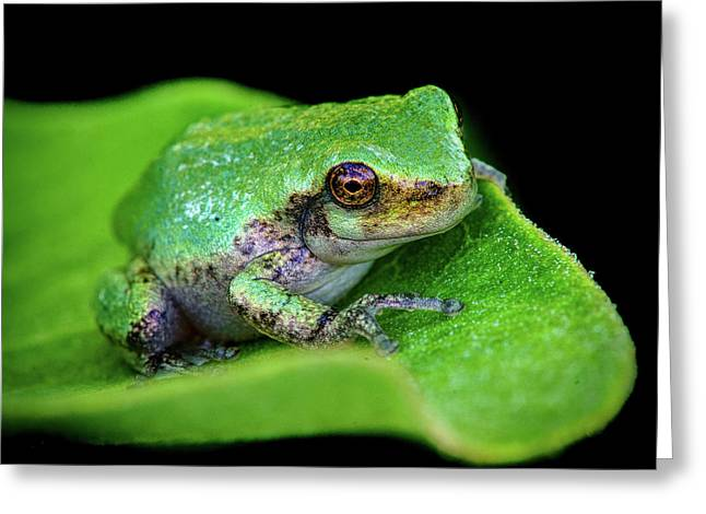 Frogie Greeting Card