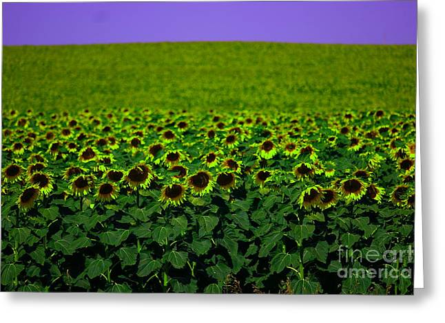 Front Row Sunflower Smiles Greeting Card