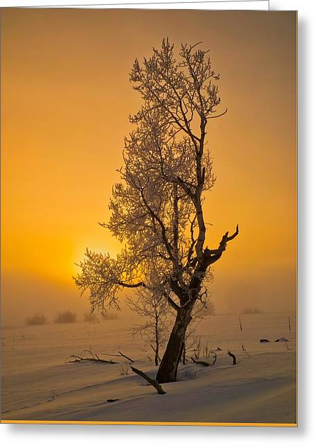 Frosted Tree Greeting Card