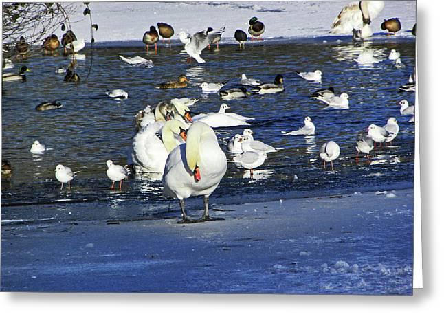 Frozen Lake. Greeting Card