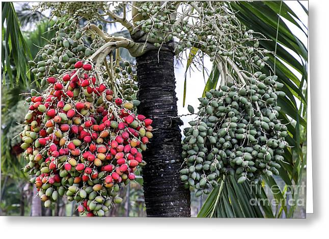 Fruity Palm Tree  Greeting Card