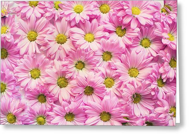 Full Of Pink Flowers Greeting Card
