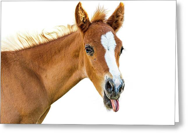 Funny Baby Horse Sticking Tongue Out Greeting Card