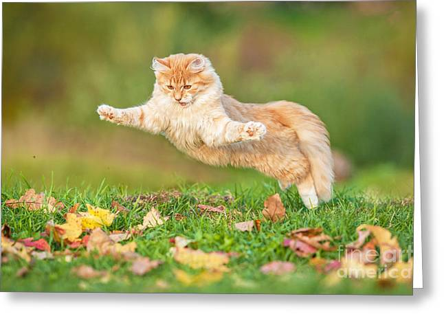 Funny Cat Flying In The Air In Autumn Greeting Card