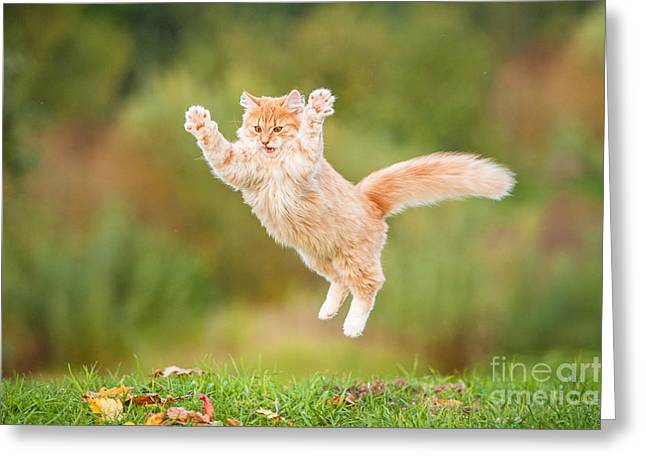 Funny Red Cat Flying In The Air In Greeting Card