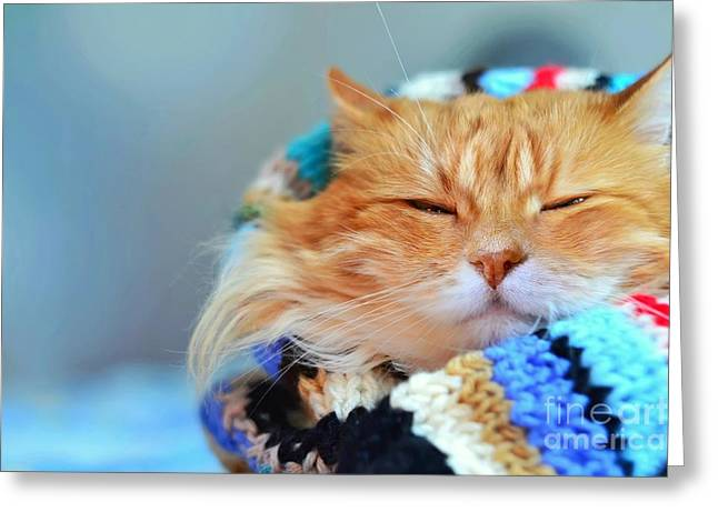 Funny Red Cat In Cozy Home Atmosphere Greeting Card