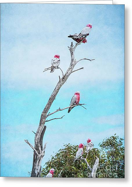 Greeting Card featuring the photograph Galahs On The Lookout by Elaine Teague