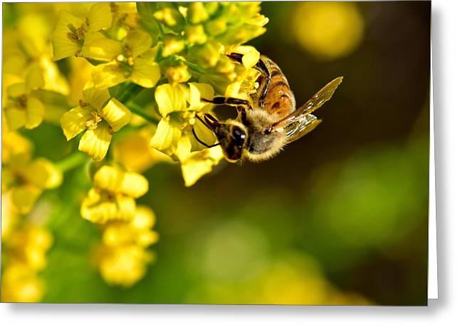 Gathering Pollen Greeting Card