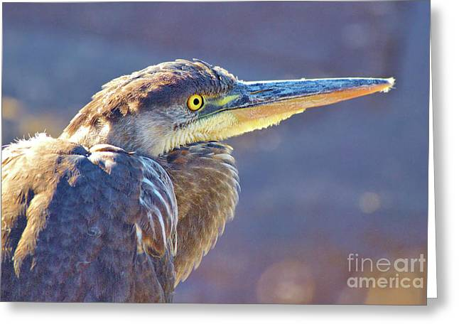 Gbh Waiting For Food Greeting Card