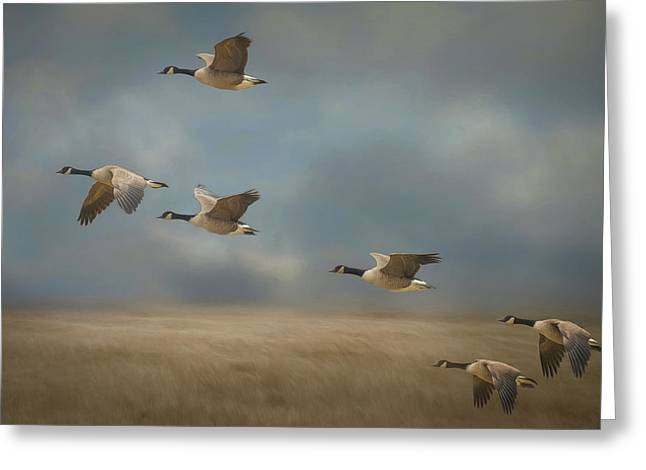 Geese, Coming In For A Landing Greeting Card